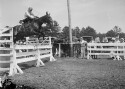 Preview image of Horse Show