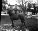 Preview image of Horse (with House)