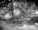 uva-lib:1044164