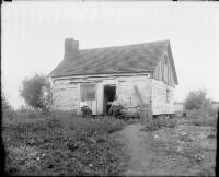 Log Cabin Ivy