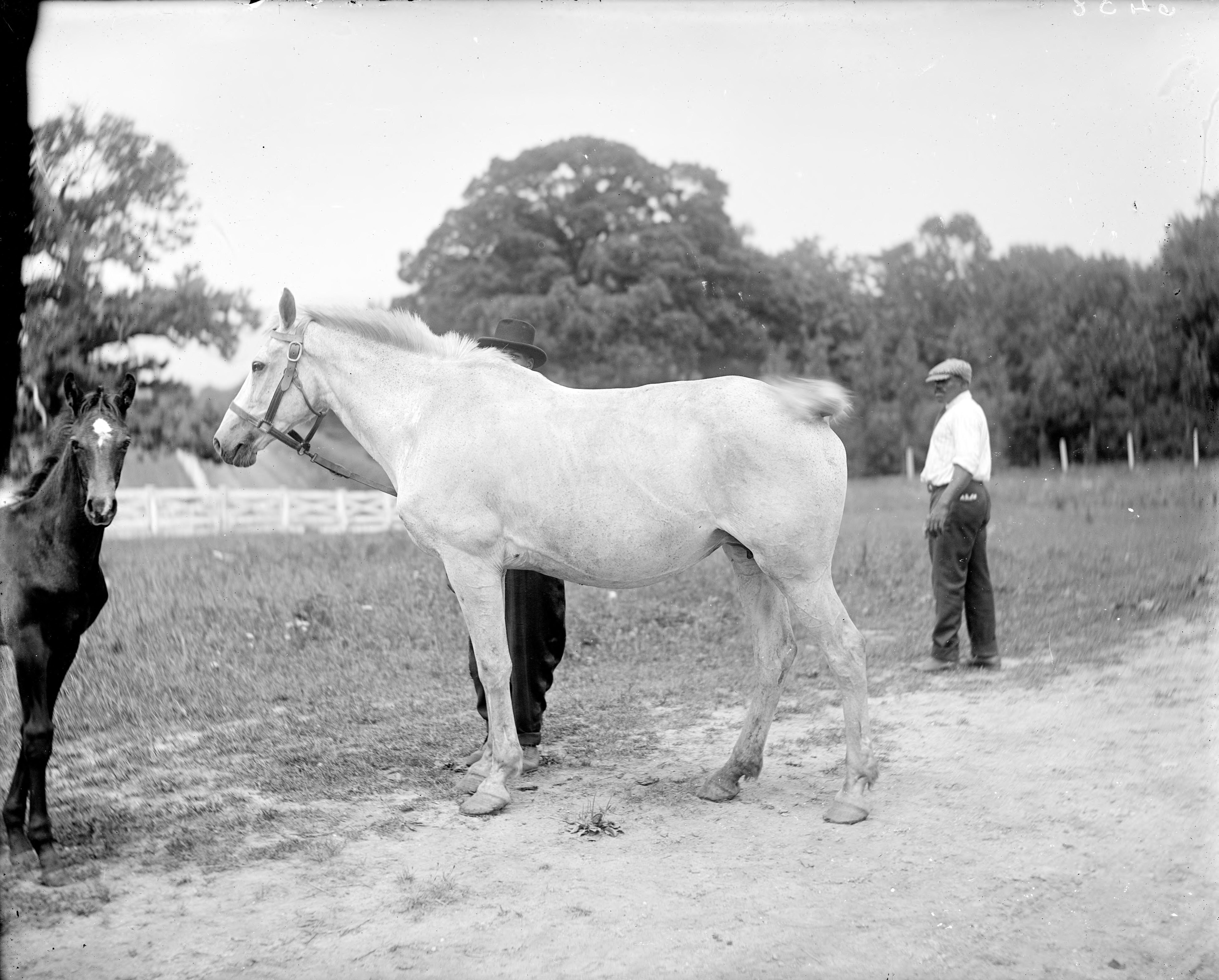 Mr. Randolf Ortman (Horses)
