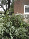 Preview image of University of Virginia (UVa) aftermath of Hurricane Isabel