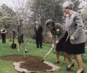 Preview image of Garden Club of Virginia tree plantings