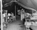 Preview image of 8th Evacuation Hospital