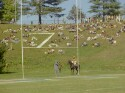 Preview image of Spectators and Cavman at University of Virginia versus North Carolina State University football game