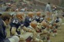 Preview image of Sidelines at University of Virginia versus Wake Forest University football game