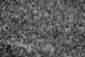 Preview image of Spectators at University of Virginia versus University of Maryland football game