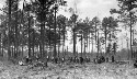 Preview image of Pamlico County Training School students clearing up the land