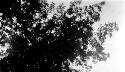 Preview image of A tree.